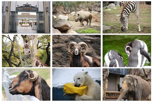 天王寺 動物園