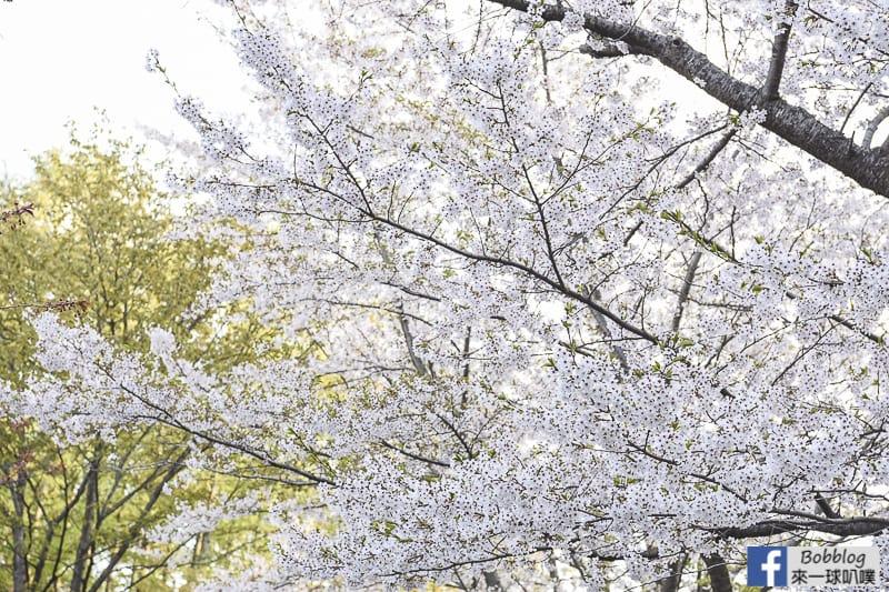 Hokkaido Shrine 14