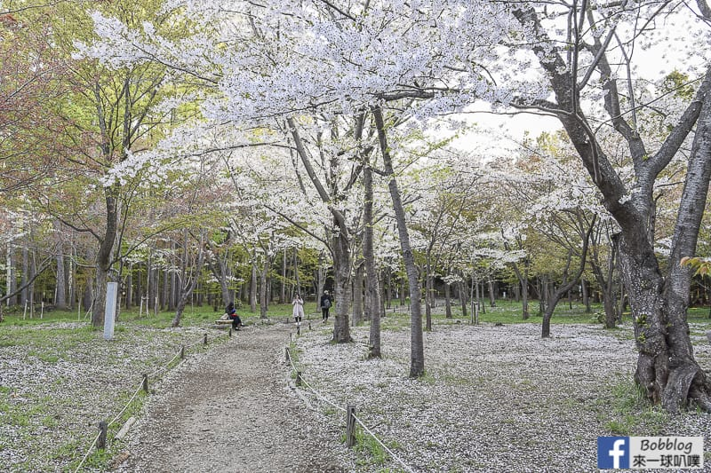 Hokkaido Shrine 15