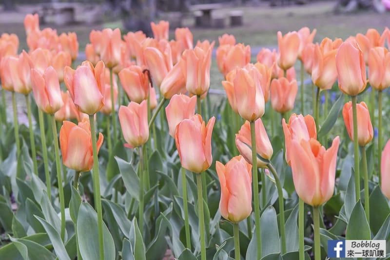 札幌熱門賞櫻景點-圓山公園櫻花、北海道神宮櫻花