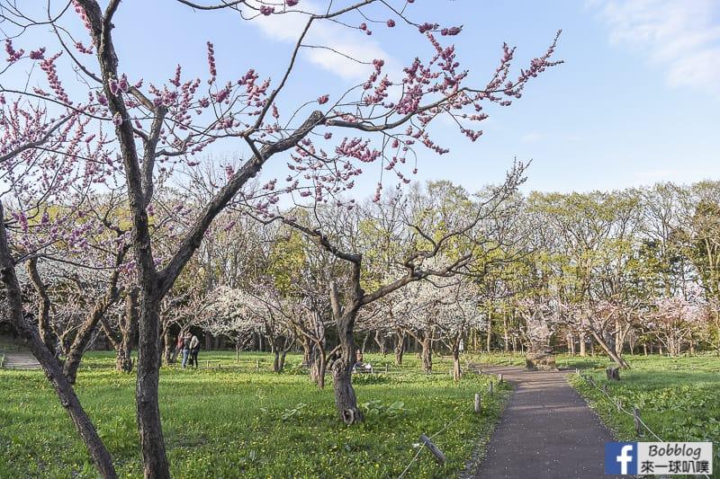 延伸閱讀:札幌熱門賞櫻景點-圓山公園櫻花、北海道神宮櫻花