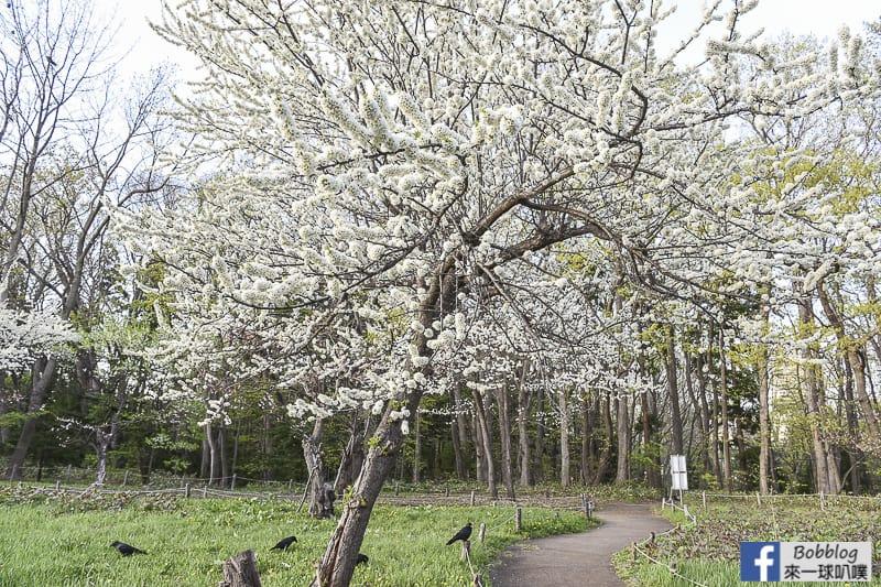 Hokkaido Shrine 7