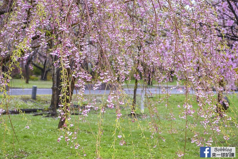 Morimachi Oniushi Park 20