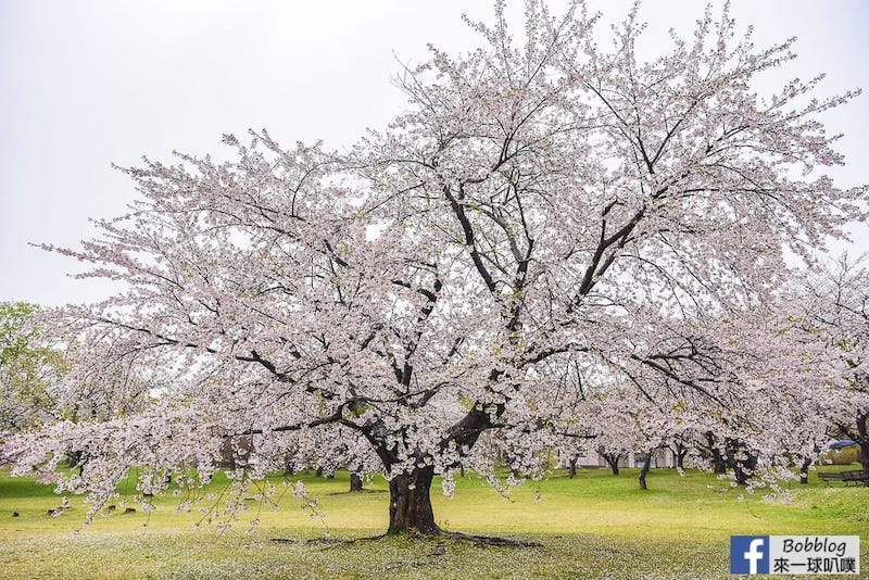 Morimachi Oniushi Park 21