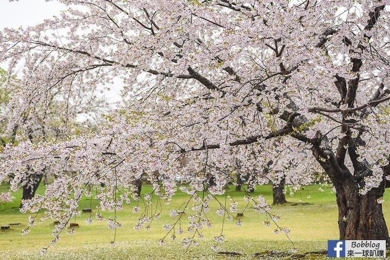 Morimachi Oniushi Park 22