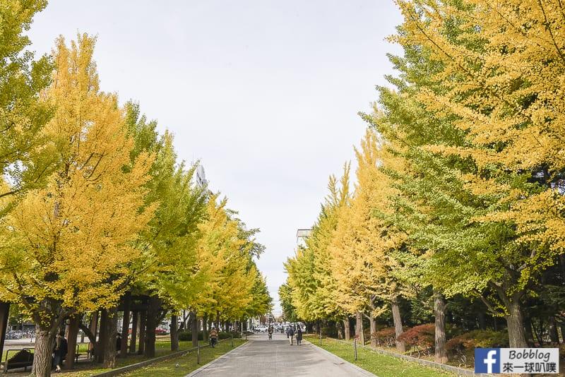 Nakajima-Park-maple