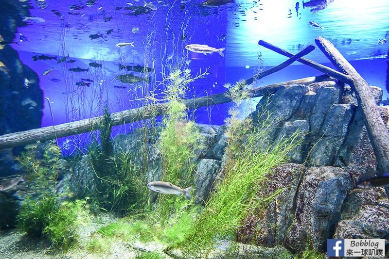 Salmon Hometown Chitose Aquarium 17