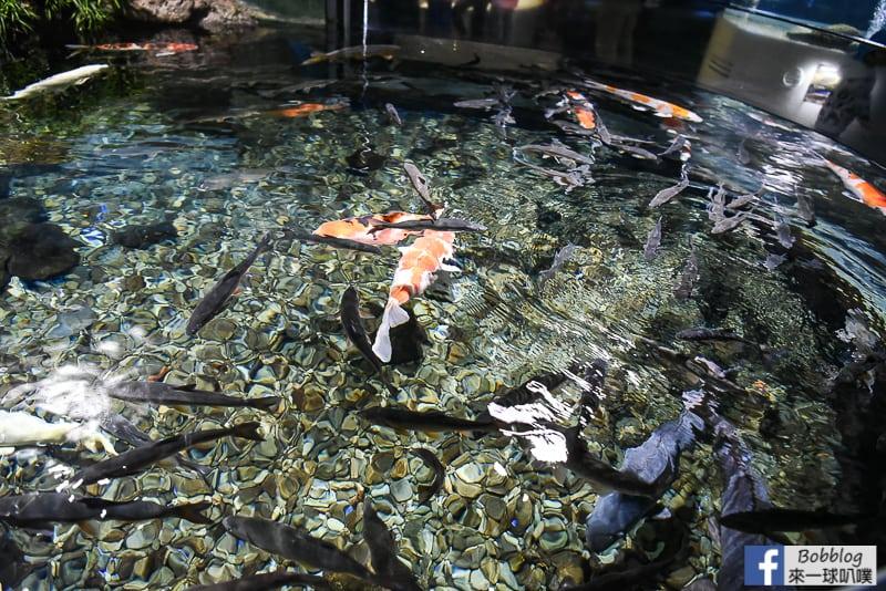 Salmon Hometown Chitose Aquarium 25