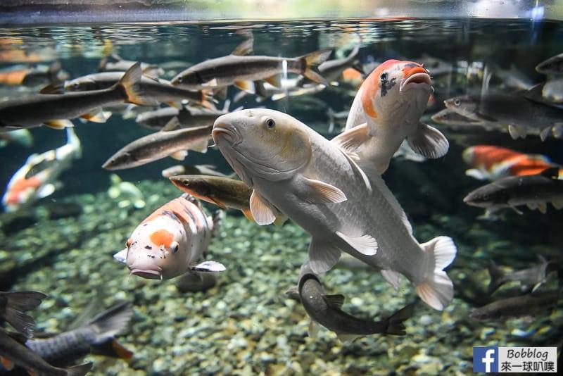 Salmon Hometown Chitose Aquarium 26