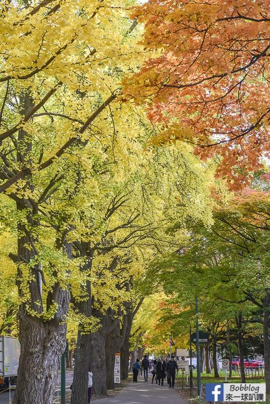 Sapporo-University-Ginkgo-Tree-11