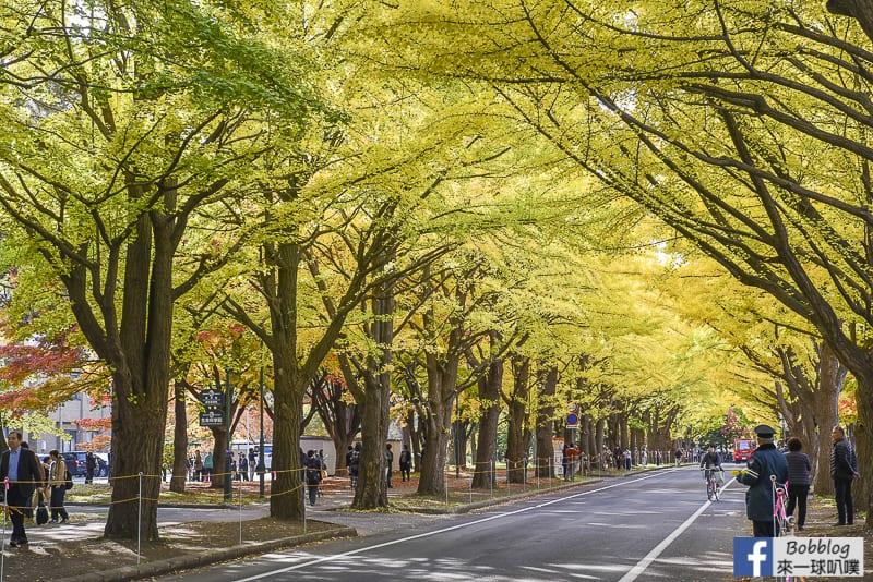 Sapporo-University-Ginkgo-Tree-13