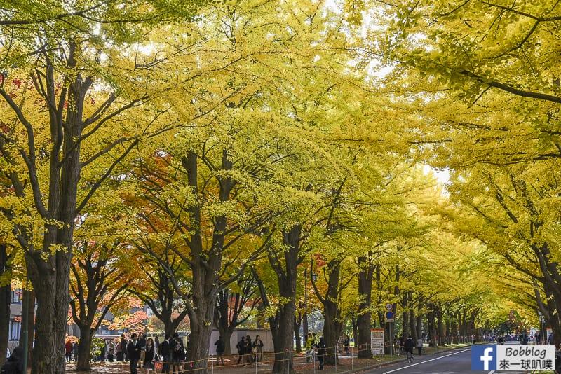 Sapporo-University-Ginkgo-Tree-15