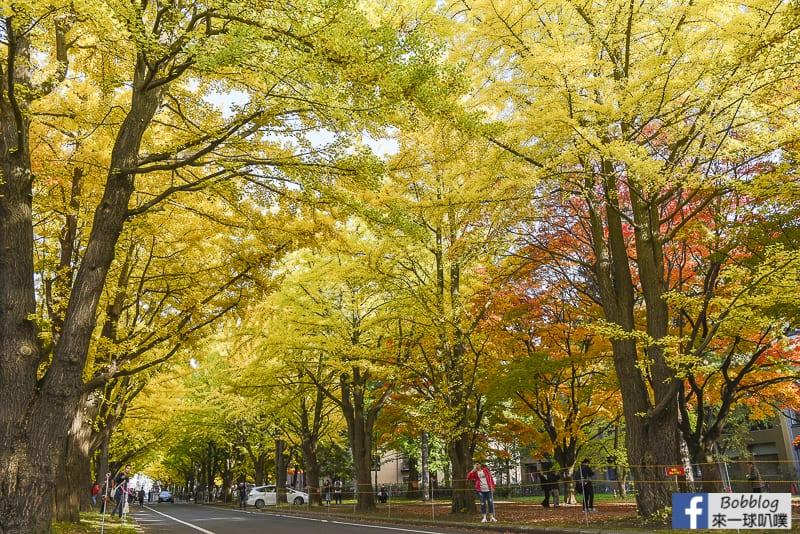Sapporo-University-Ginkgo-Tree-21