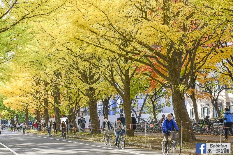 Sapporo-University-Ginkgo-Tree-25