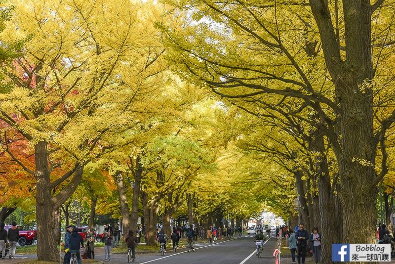 Sapporo-University-Ginkgo-Tree-26