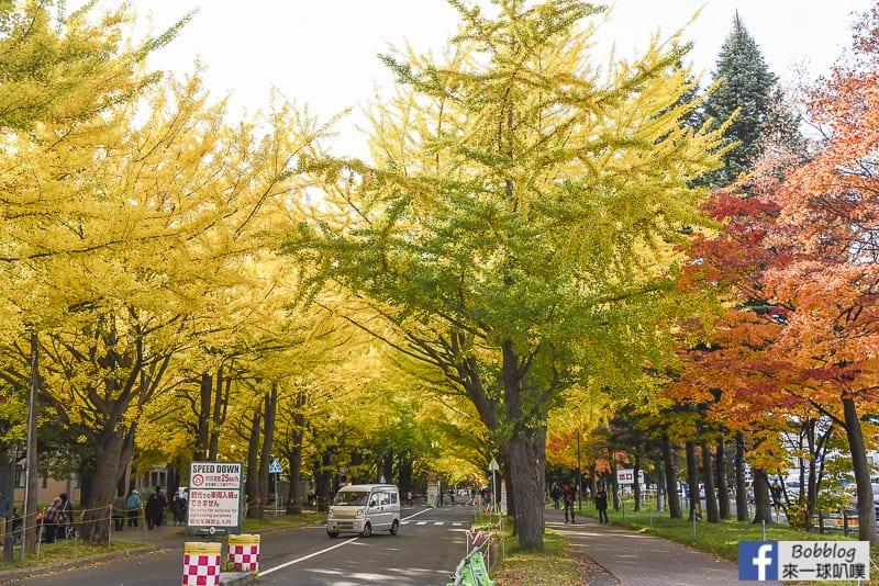 Sapporo-University-Ginkgo-Tree-3