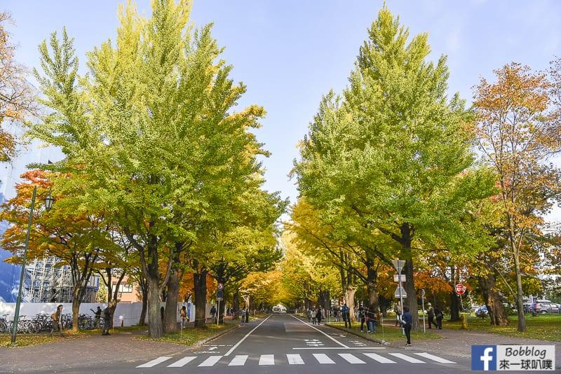 Sapporo-University-Ginkgo-Tree-33