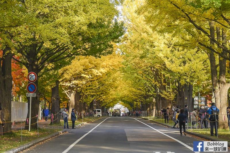 Sapporo-University-Ginkgo-Tree-34