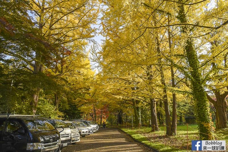 Sapporo-University-Ginkgo-Tree-35