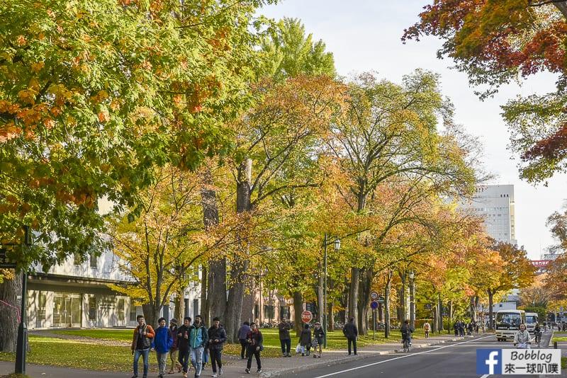 Sapporo-University-Ginkgo-Tree-38