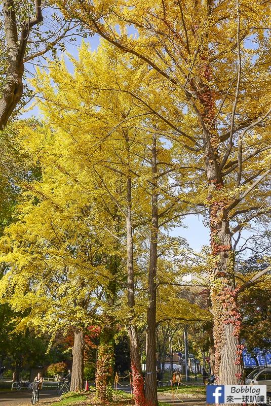 Sapporo-University-Ginkgo-Tree-56