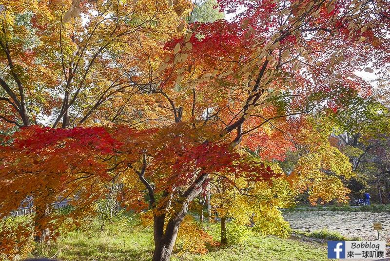 Sapporo-University-Ginkgo-Tree-59