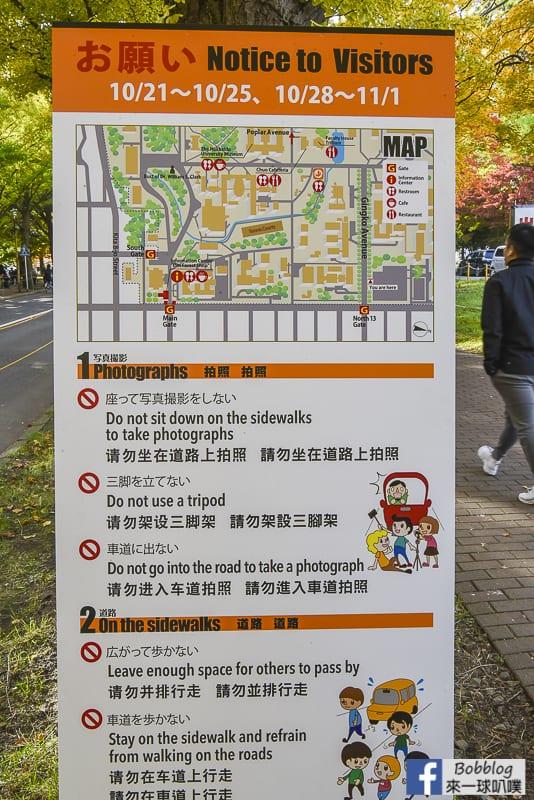 Sapporo-University-Ginkgo-Tree-6