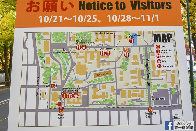Sapporo-University-Ginkgo-Tree-7