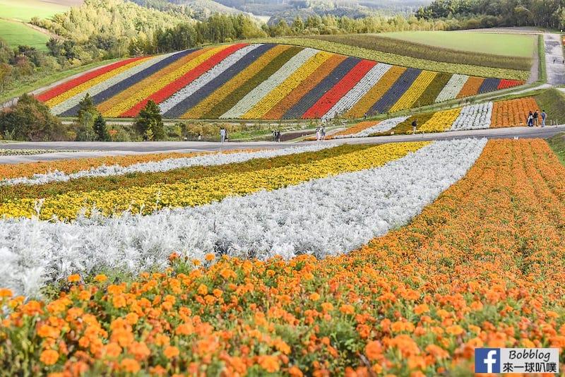 美瑛四季彩之丘超美花海、Alpaca Farm羊駝牧場(可愛草泥馬)