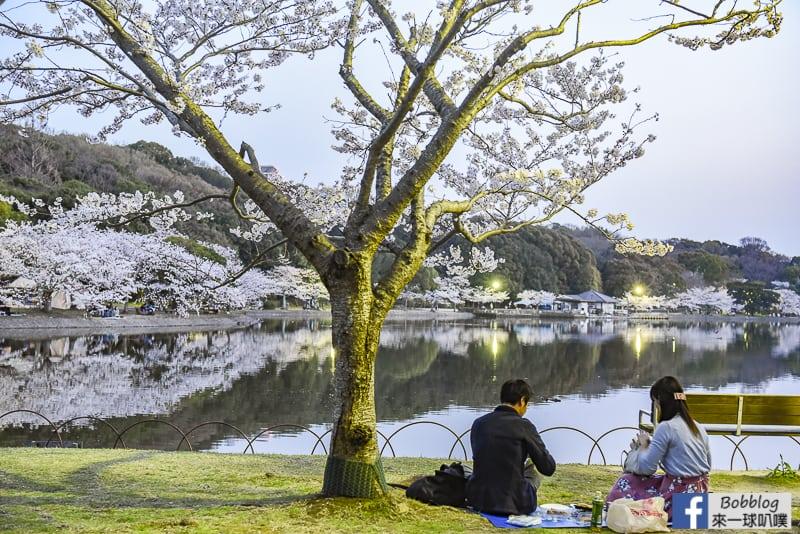 兵庫明石城櫻花,明石公園櫻花(日本櫻花百選,日本100名城)