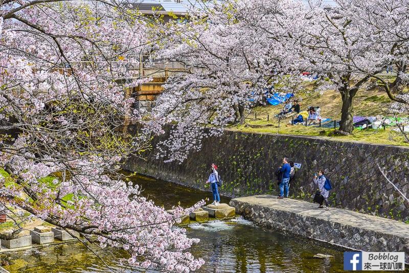延伸閱讀:兵庫夙川公園櫻花(櫻花百選景點,1600株美麗櫻花)