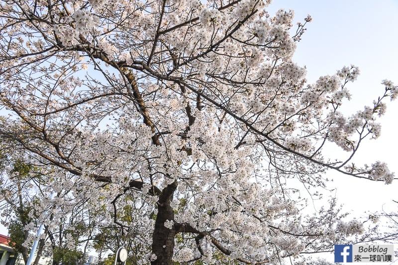 Kema Sakuranomiya Park-12