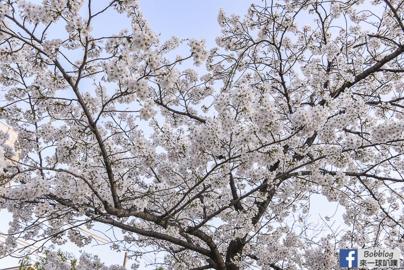 Kema Sakuranomiya Park-19