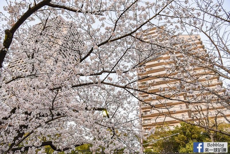 Kema Sakuranomiya Park-39