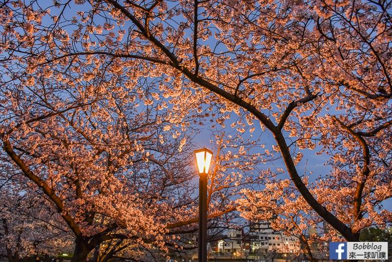 Kema Sakuranomiya Park-49