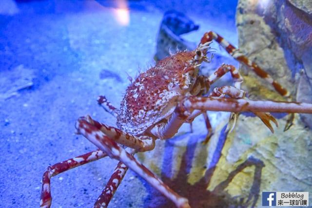 Kujukushima-Aquarium-Umikirara-18