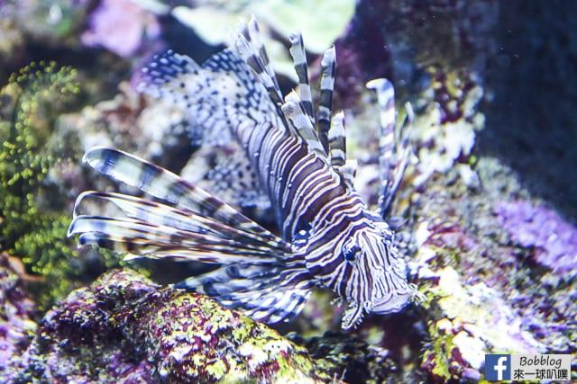 Kujukushima-Aquarium-Umikirara-19