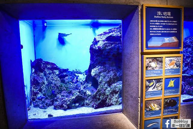 Kujukushima-Aquarium-Umikirara-21