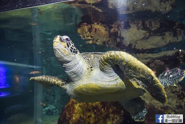 Kujukushima-Aquarium-Umikirara-27