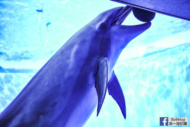 Kujukushima-Aquarium-Umikirara-32