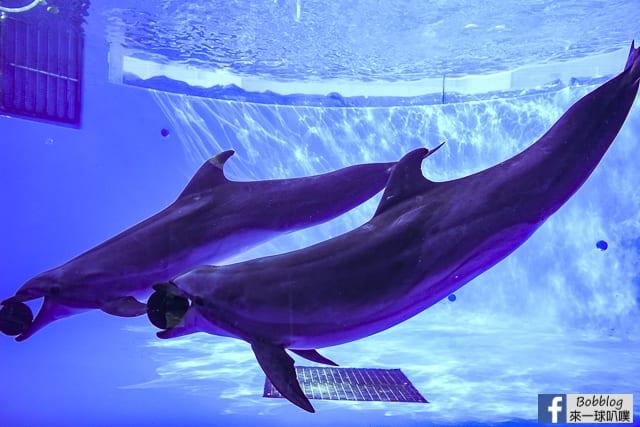 Kujukushima-Aquarium-Umikirara-34