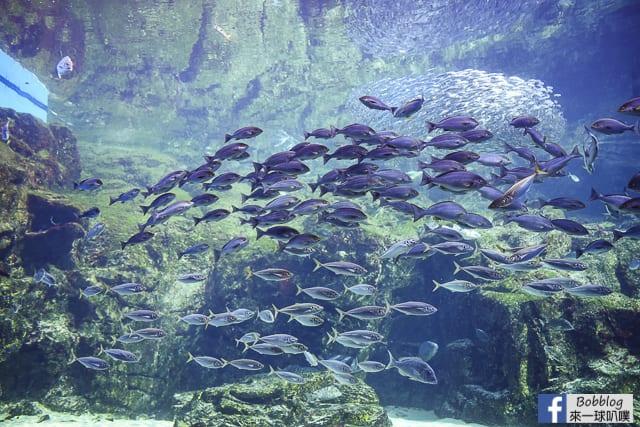 Kujukushima-Aquarium-Umikirara-37