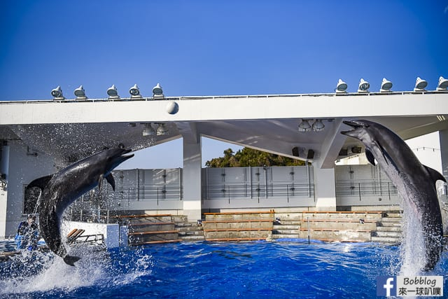Kujukushima-Aquarium-Umikirara-46