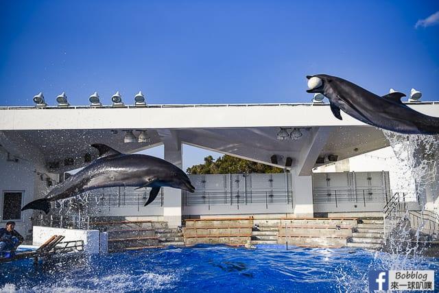 佐世保九十九島水族館(精彩海豚表演秀,親子景點)
