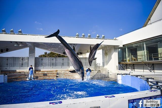 Kujukushima-Aquarium-Umikirara-50