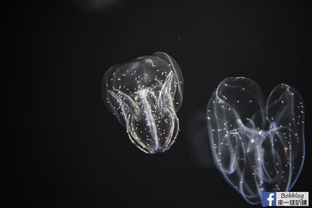 Kujukushima-Aquarium-Umikirara-67