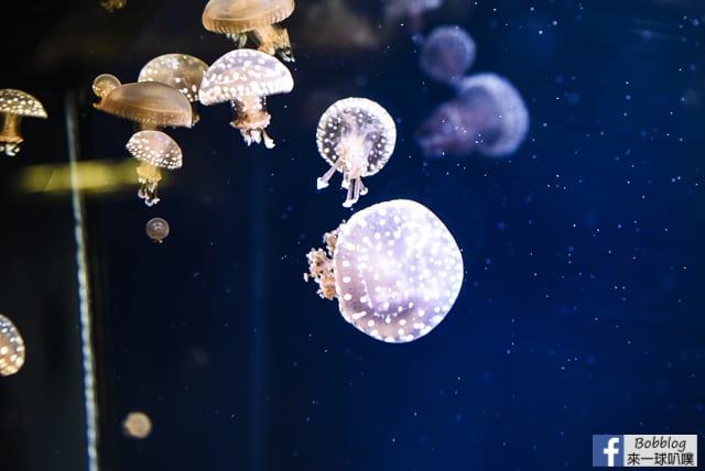 Kujukushima-Aquarium-Umikirara-69