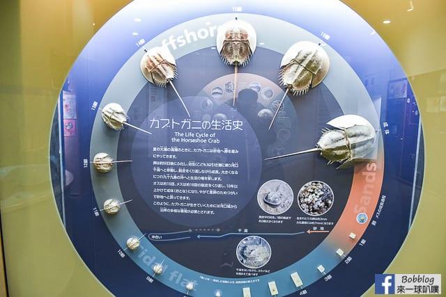 Kujukushima-Aquarium-Umikirara-74