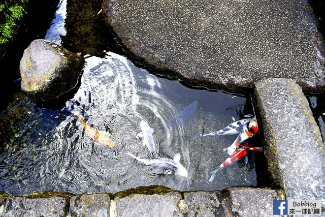 島原湧泉巡遊-錦鯉湧水街道,島原溫泉Yutorogi足湯 @來一球叭噗日本自助攻略