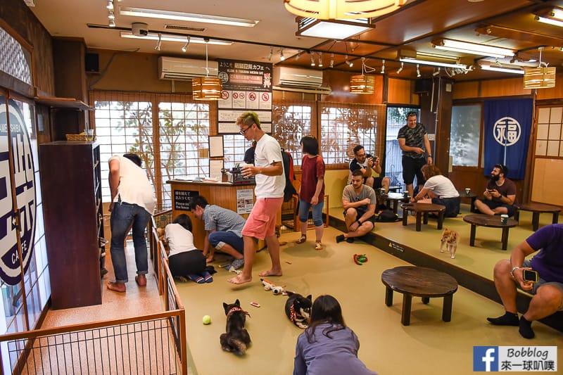 Miyajima-owls-cats-forest-12